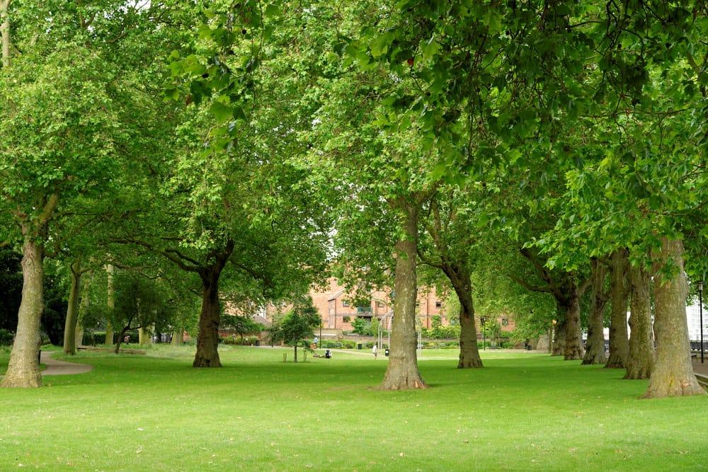 alberi adottati dai cittadini