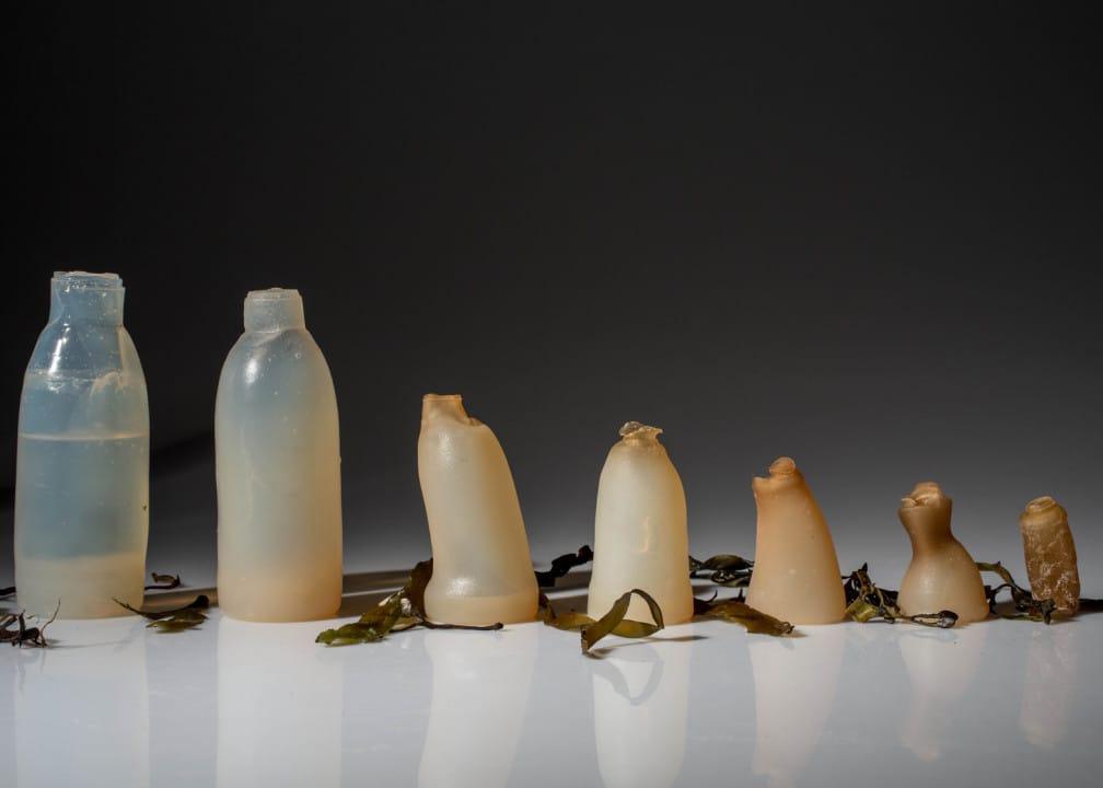 bottiglie da alghe rosse