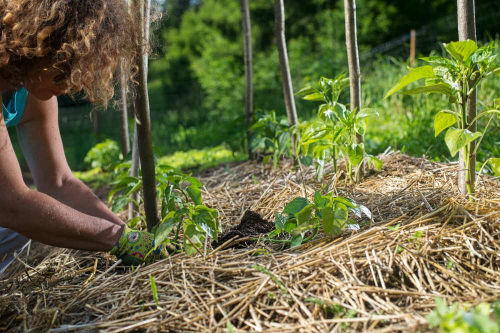 come fare un orto sinergico