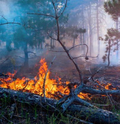 Siberia, caldo bollente come in Africa. Boschi in fiamme e impianti del gas a rischio