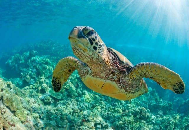 come-fare-snorkeling (2)