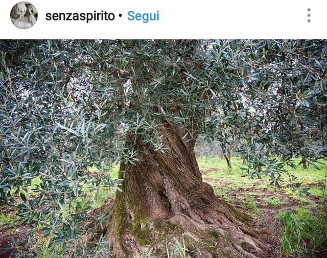 mostra-fotografica-sugli-ulivi (7)