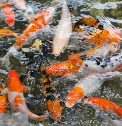 ReGeniusLoci, la cooperativa che punta sull'acquaponica per riqualificare la città (foto)