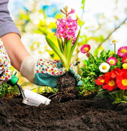 Diserbanti naturali per l'orto: ecco i migliori, dall'aceto al bicarbonato di sodio