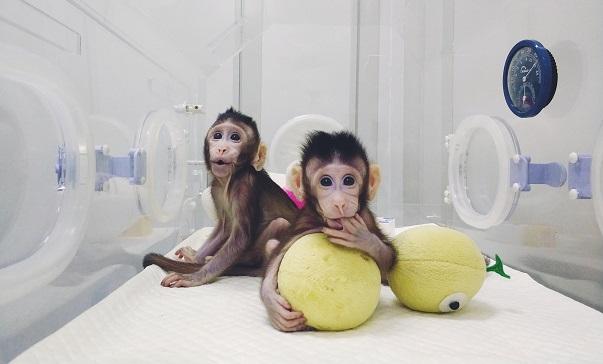 rischi clonazione uomo