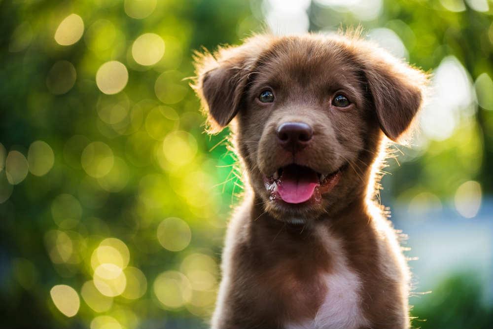 rimedi per la cura del pelo del cane