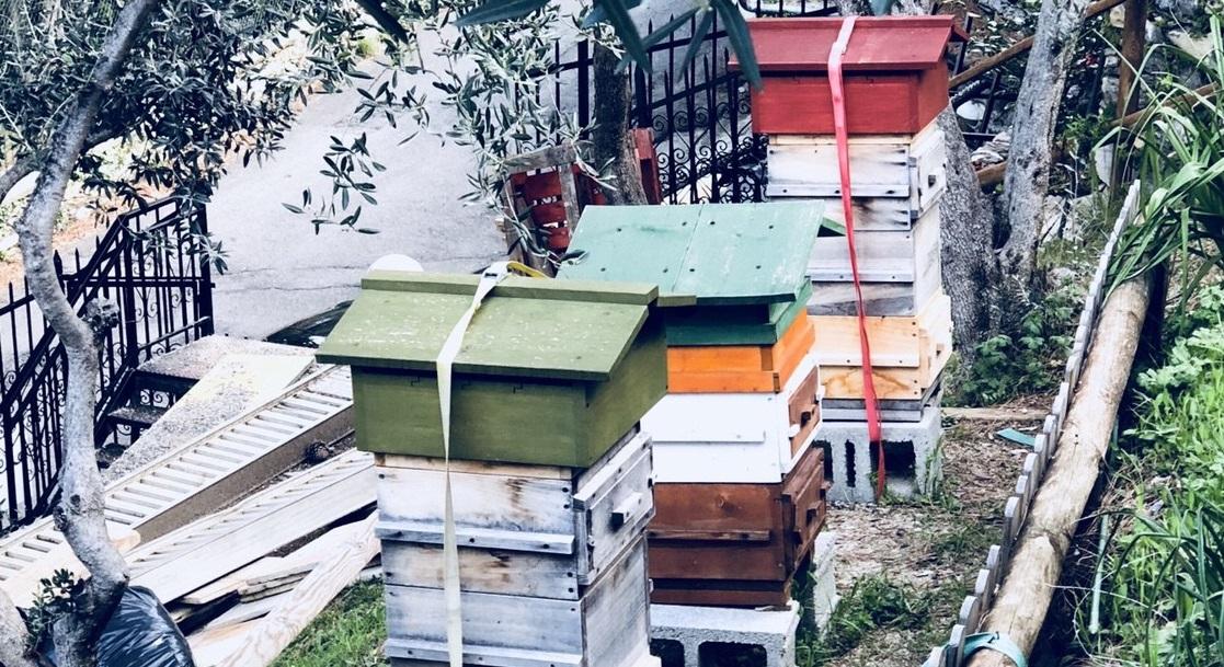 come allevare le api