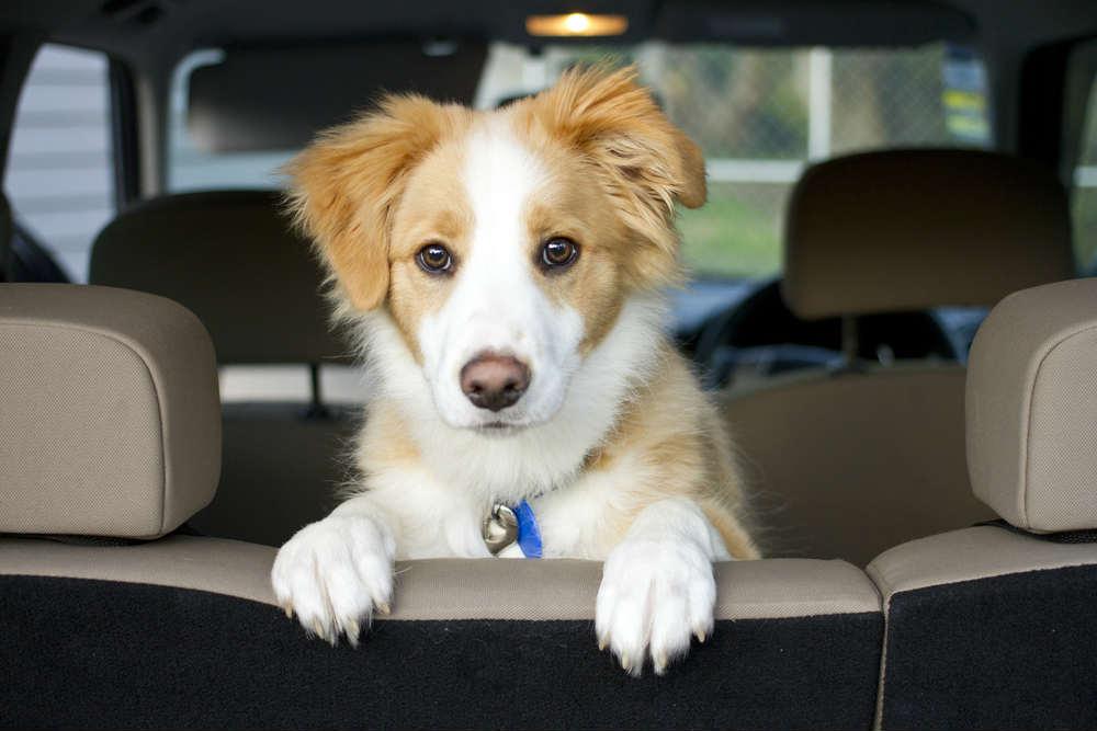 Come viaggiare con cane e gatto