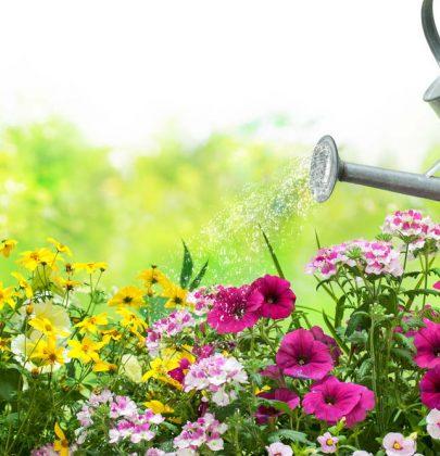 Annaffiare le piante, senza sprecare acqua: basta scegliere l'ora giusta. E prevedere la pacciamatura