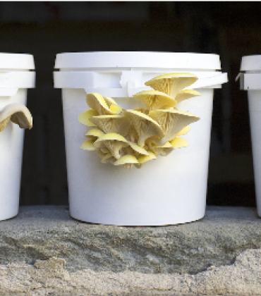 Funghi Espresso, un'azienda modello che con gli scarti delle macchine del caffè dei bar produce ottimi funghi. Da utilizzare in cucina, con tante ricette (foto)