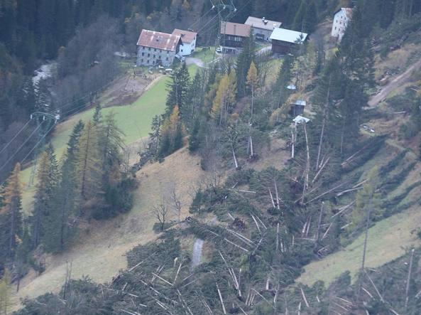 boschi distrutti