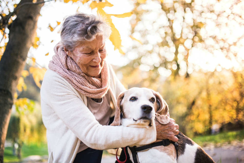 cure veterinarie gratis veneto