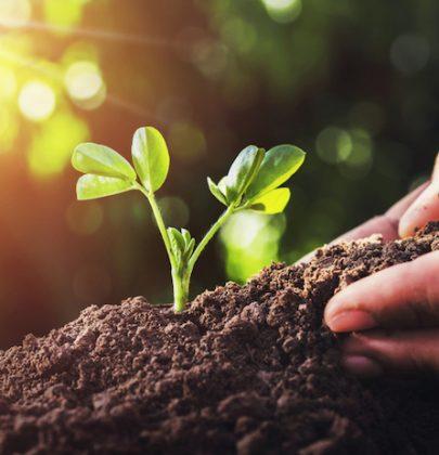 Agricoltura sostenibile significa meno sprechi di terra e di acqua. E più cibo sano per 10 miliardi di persone, quanti saremo nel 2050