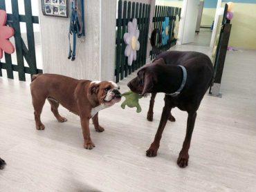 asilo per cani