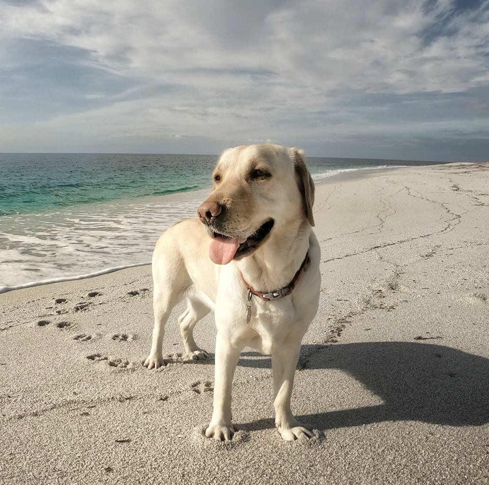 cane che raccoglie la plastica