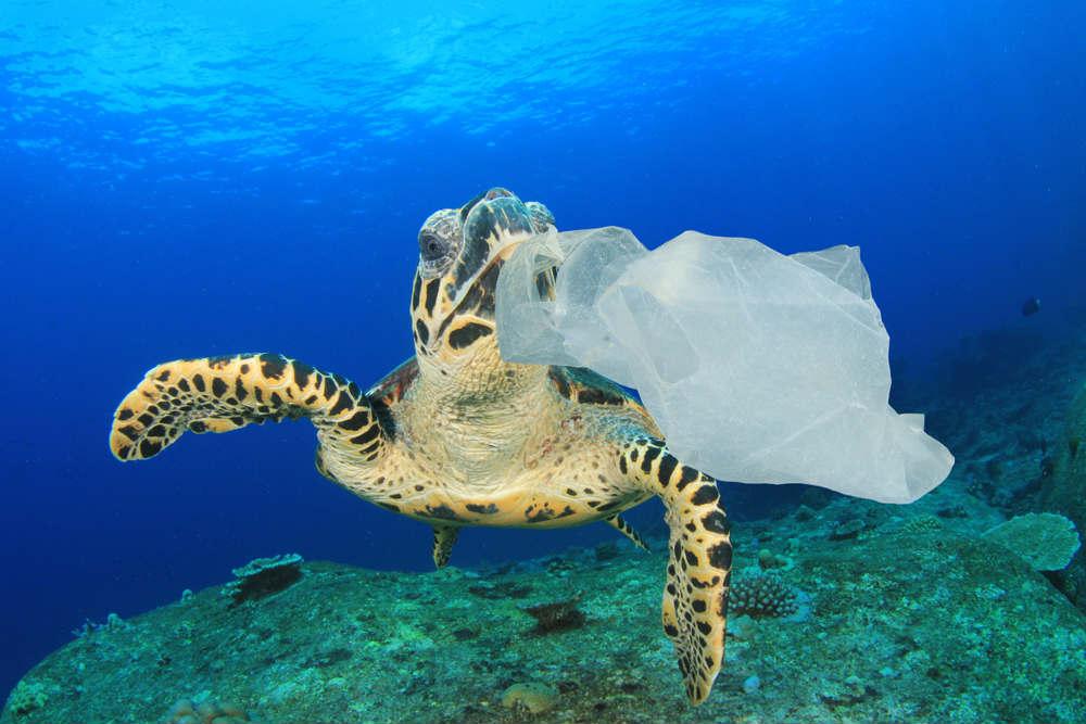 rifiuti di plastica negli oceani