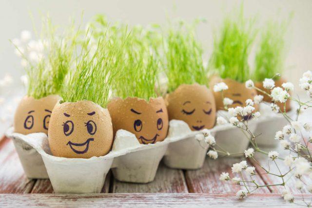 Riciclo gusci delle uova | Non sprecare