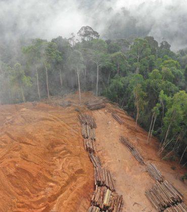 Deforestazione, in dieci anni abbiamo perso 25 milioni di ettari ricoperti da alberi (foto)