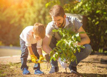 come piantare un albero