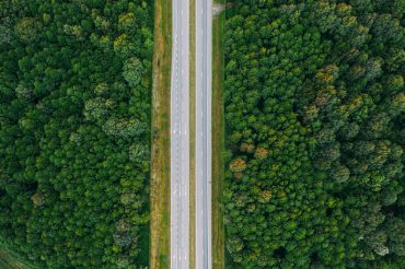 alberi contro l'inquinamento