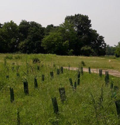 Boschi E.ON, così un'azienda energetica pianta alberi in 26 aree di diverse regioni italiane