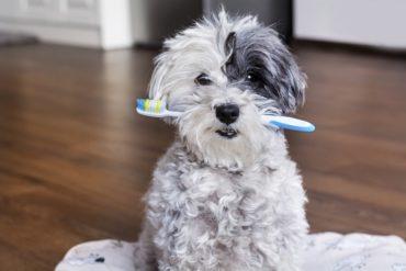 pulizia denti del cane
