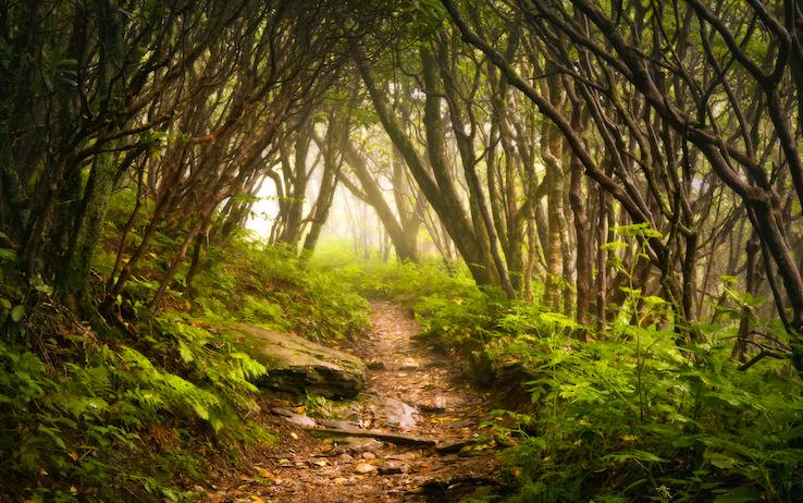 BIODIVERSITÀ FORESTE