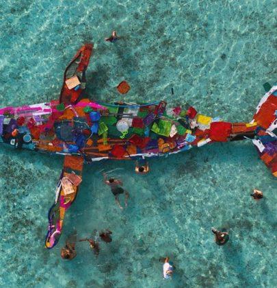 Bordalo II, l'artista che trasforma i rifiuti in opere d'arte, per salvare la natura e gli animali