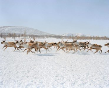 l'uomo che sussurra alle renne