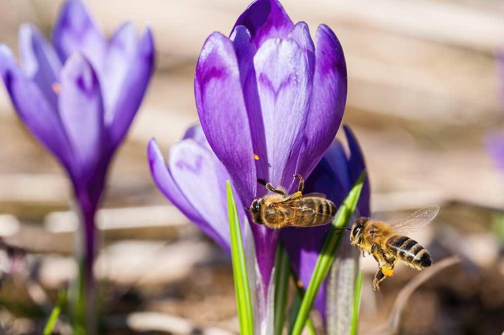 app censimento api selvatiche