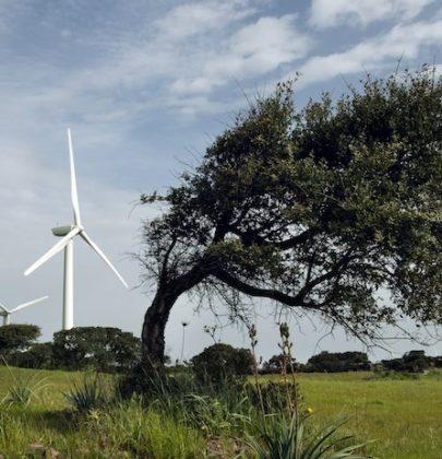 Parchi eolici, il piano di crescita dell'Enel in Italia. Il 52 per cento della produzione è da fonti rinnovabili