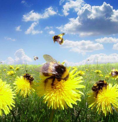 PollinAction, il progetto che semina prati fioriti per salvare la biodiversità. E le api