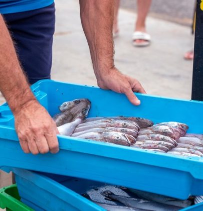 Ri-Pescato, così il pesce catturato in modo illegale finisce sulle tavole delle famiglie povere